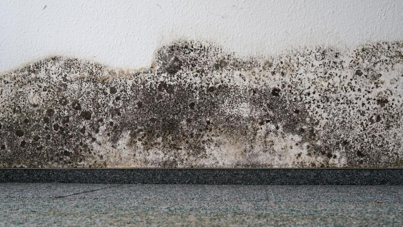 Mold Remediation Reference Guides